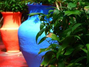 Marrakech - Jardins de Majorelle (16)