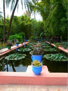 Marrakech - Jardins de Majorelle (19)