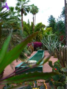 Marrakech - Jardins de Majorelle (23)
