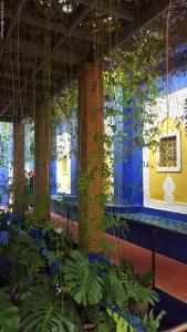Marrakech - Jardins de Majorelle (5)