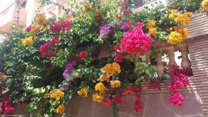 Marrakech - Jardins de Majorelle (7)