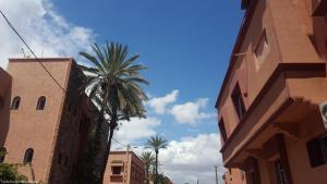 Marrakech - Jardins de Majorelle (9)